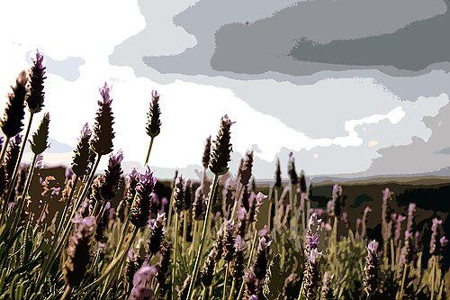 Lavander Landscape by GetCarter
