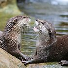 hungry otters by Martin Pot