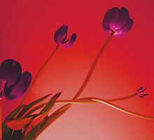 Stems & Stamens by Carmen  Cilliers