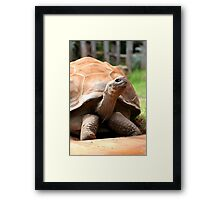 Galapagos Tortoise Framed Print
