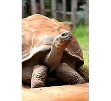 Galapagos Tortoise Photographic Print
