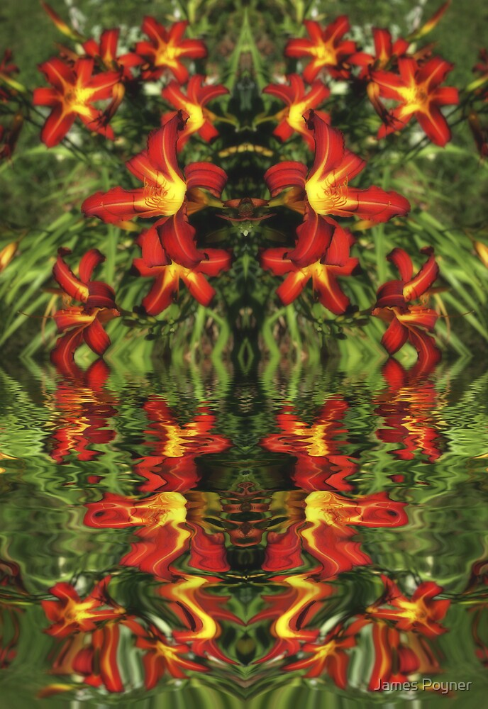 Water Lillies by James Poyner