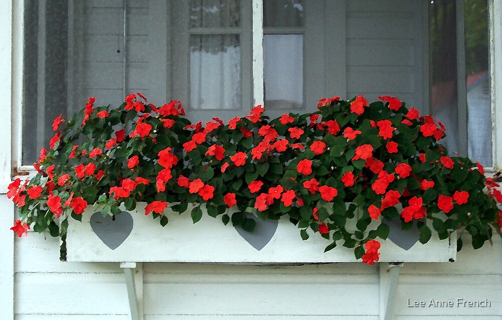 Impatiens in a Box by Lee Anne French