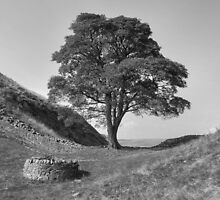 Sycamore Gap by Hyperluminal