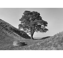 Sycamore Gap Photographic Print