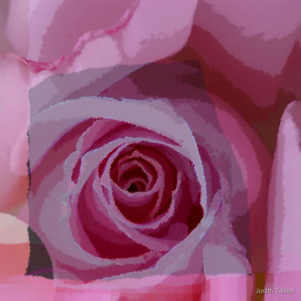 Lavender rose by Judith Tillson