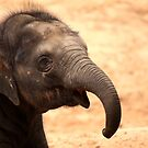 Baby Elephant Smile by Daniela Pintimalli