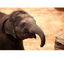 Baby Elephant Smile Photographic Print