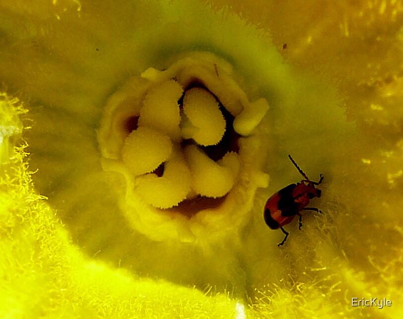 POPULAR PUMPKIN FLOWER by EricKyle