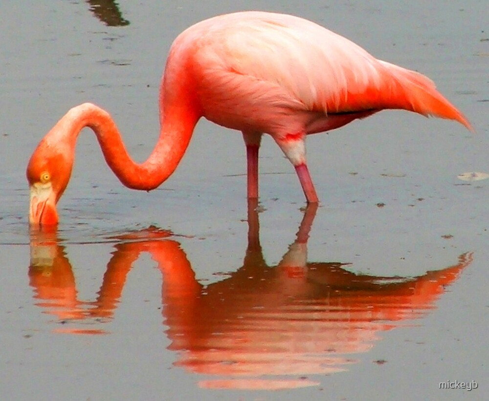 pink mirror image by mickeyb