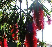 flowers by kateee