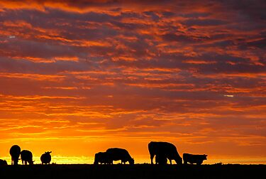 Glorious Grazing by MattTworkowski