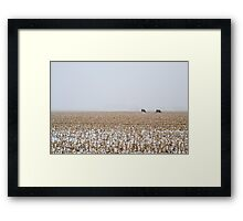 Cows in a Cornfield during Snowstorm Framed Print