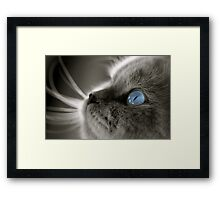 Blue Gaze Framed Print