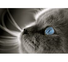 Blue Gaze Photographic Print