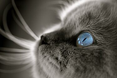 Blue Gaze by Douzy