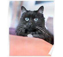 Cat 14 Poster