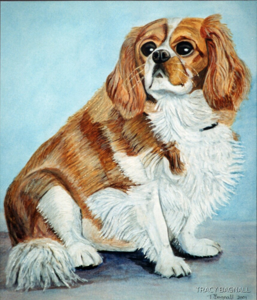 King Charles Spaniel by TRACY BAGNALL
