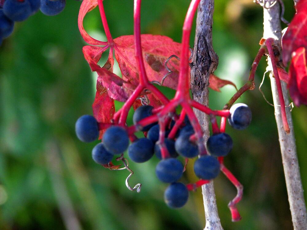 blue berrys by ashleymaiwoo