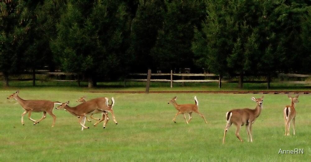 Dear Deers by AnneRN
