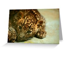 Baby Leopard Greeting Card