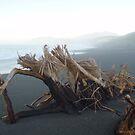 Driftwood by Paul Finnegan