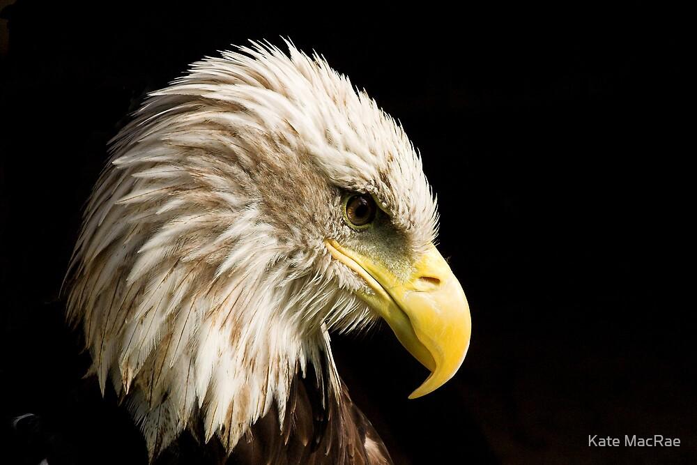 Bald Eagle by Kate MacRae
