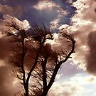 Windtree by waitin' for rain