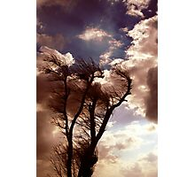 Windtree Photographic Print