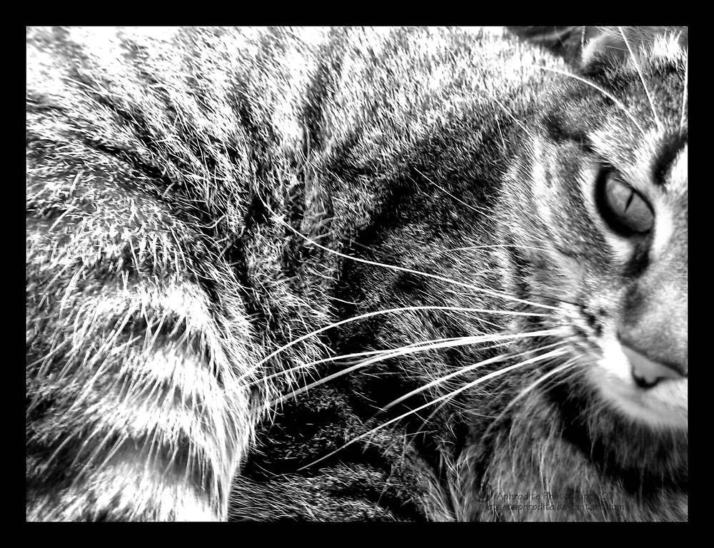 kitty in a bowl by JetsetAphrodite