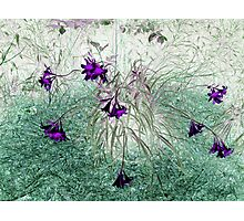 Abstract Lilies Photographic Print