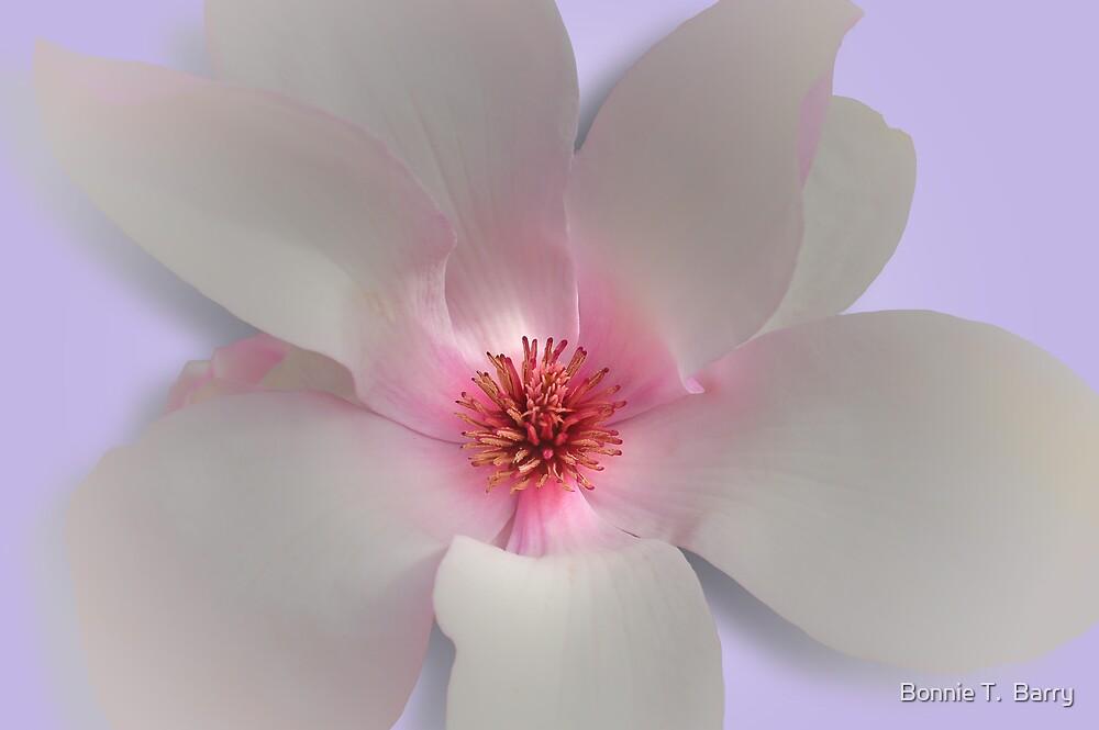 Luminous by Bonnie T.  Barry