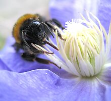Bee by Luci Mahon