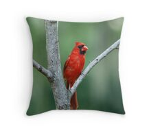 Cardinal in Fork of a Tree Throw Pillow