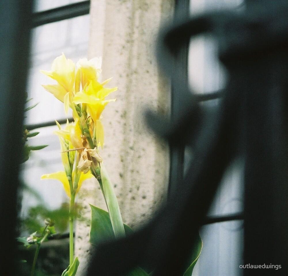 Yellow by outlawedwings