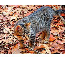 Autumn Kitty Photographic Print