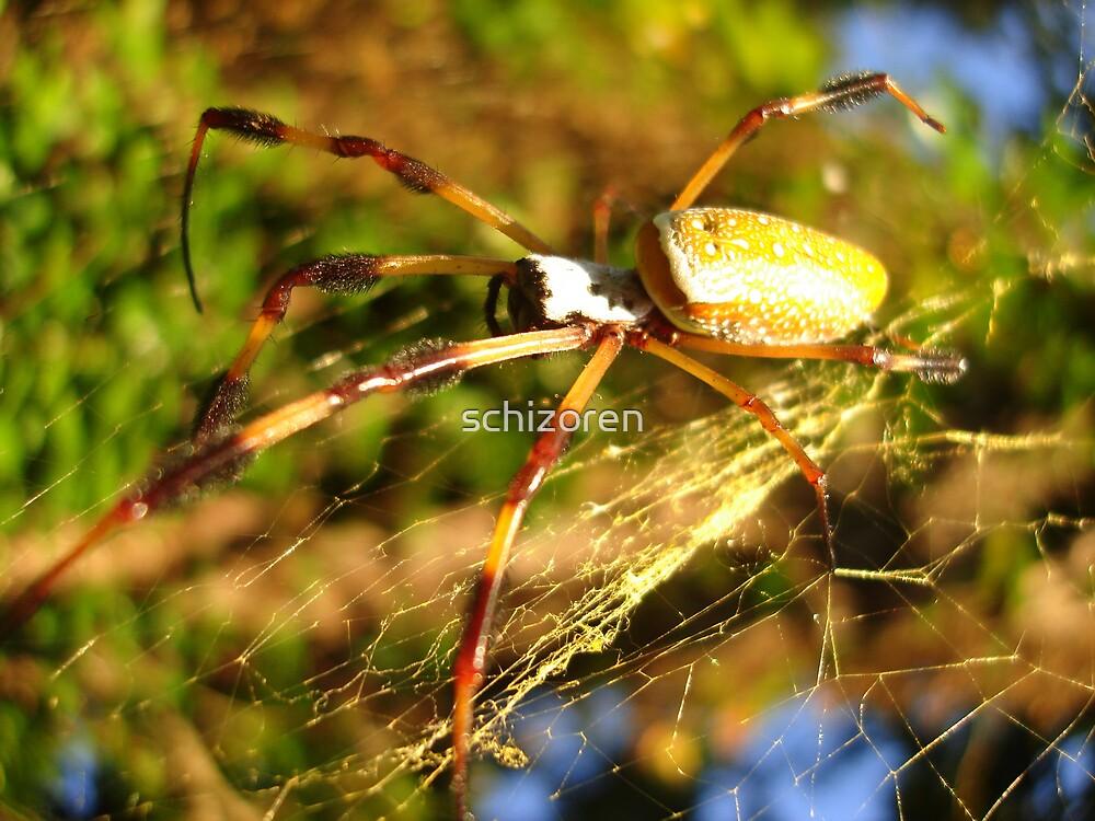 golden silk spider by schizoren