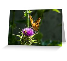 Bee & Butterfly  Greeting Card