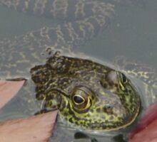 Frog Lily Sticker