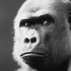 Gorilla by oscarcwilliams