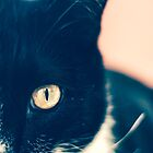 In the Eye of the Cat by Kadwell