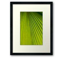 Fern Texture 2 Framed Print