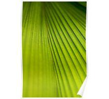Fern Texture 2 Poster