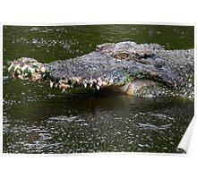 Crocodile 1 Poster