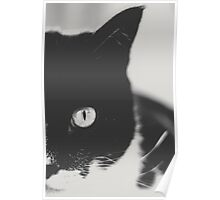 Portrait of a Cat in Black and White Poster