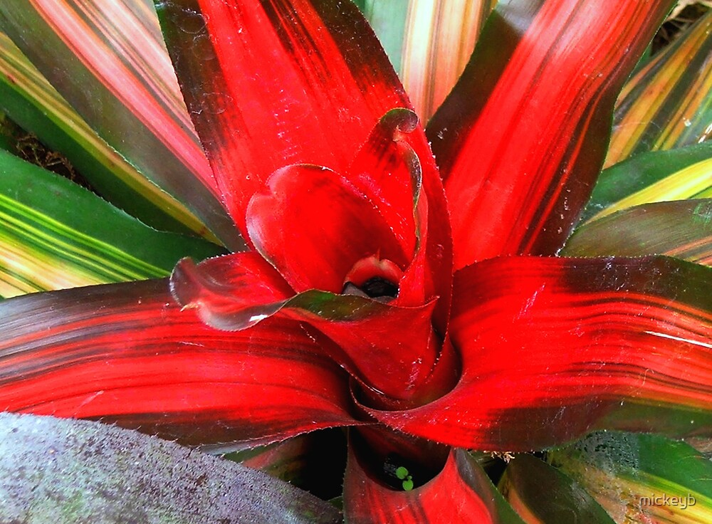 flower power by mickeyb