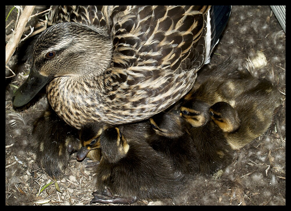 Mother Of 12 by Jenni77