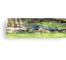 Stretch Gator Canvas Print