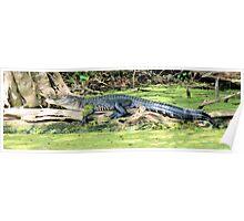 Stretch Gator Poster