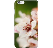 Macro flowers, floral, nature photography iPhone Case/Skin